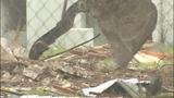 Photos: Sanford housing project demolition underway - (3/10)