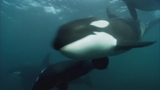 Photos: Movie stills of 'Blackfish' - (9/17)
