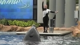 Photos: Movie stills of 'Blackfish' - (3/17)