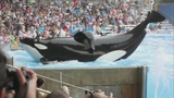 Photos: Movie stills of 'Blackfish' - (14/17)