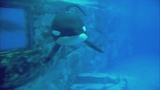 Photos: Movie stills of 'Blackfish' - (7/17)