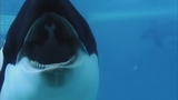 Photos: Movie stills of 'Blackfish' - (10/17)