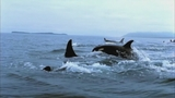 Photos: Movie stills of 'Blackfish' - (17/17)