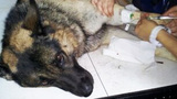 Photos: Police dog 'Seabee' hurt in takedown - (3/3)
