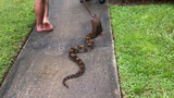Photos: Boa constrictor found in Casselberry… - (4/4)