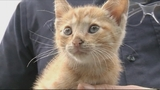 Photos: Kitten found under hood of car - (6/9)
