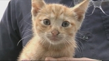 Photos: Kitten found under hood of car - (3/9)