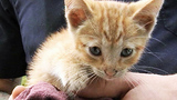 Photos: Kitten found under hood of car - (4/9)
