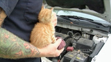 Photos: Kitten found under hood of car - (1/9)