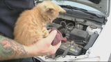 Photos: Kitten found under hood of car - (9/9)
