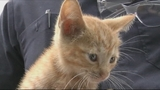 Photos: Kitten found under hood of car - (8/9)