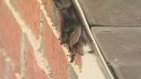Photos: Bats besiege Volusia Co. Health Department - (4/4)