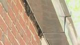 Photos: Bats besiege Volusia Co. Health Department - (2/4)