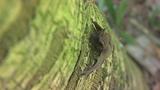 Photos: Bats besiege Volusia Co. Health Department - (1/4)