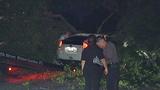 Photos: Man crashes into oak tree limb - (7/7)