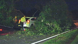 Photos: Man crashes into oak tree limb - (4/7)