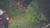 Photos: Man crashes into oak tree limb - (2/7)