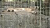 Photos: Animals at the Central Florida Zoo - (3/12)