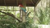 Photos: Animals at the Central Florida Zoo - (7/12)