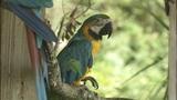 Photos: Animals at the Central Florida Zoo - (12/12)