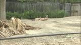 Photos: Animals at the Central Florida Zoo - (8/12)