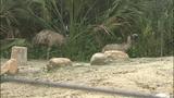 Photos: Animals at the Central Florida Zoo - (5/12)