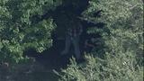 Photos: Altercation involving Zimmerman, family - (10/12)