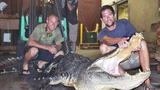 Photos: 565-pound gator caught in Lakeland - (2/6)