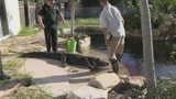Photos: Real-estate agent finds gator in pool - (9/11)
