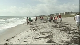 NASA workers clean up Cocoa Beach - (3/7)