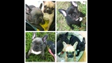 Photos: Stolen puppies - (7/8)