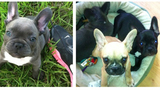 Photos: Stolen puppies - (5/8)