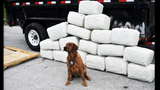 Photos: MBI drug trafficking bust - (15/21)