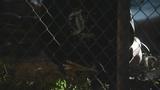 Photos: MBI drug trafficking bust - (10/21)