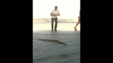 Photos: Rattlesnake found on New Smyrna Beach - (1/5)