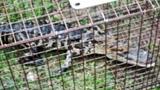 Photos: Alligator found in hot tub - (7/8)