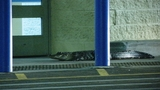 Photos: Alligator at Apopka Walmart - (6/9)