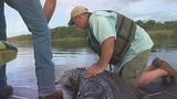 Photos: Gator hunting grows in popularity - (9/12)
