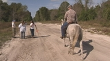 Photos: Texas Equusearch in Volusia County - (11/15)
