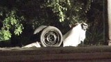 Photos: DUI suspect crashes into pond - (7/7)