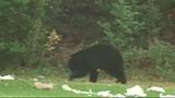 Photos: Bear spends morning playing in Orange… - (7/9)