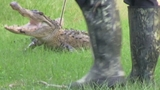 Photos: Woman finds gator outside home - (2/10)