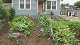 Photos: College Park garden fight - (9/10)
