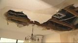 Photos: Wild animals destroy woman's home - (2/8)