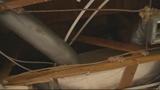 Photos: Wild animals destroy woman's home - (6/8)