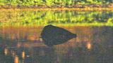 Photos: Naked man crashes into lake - (1/5)
