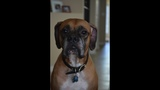 Photos: Family wants pet dog Edgar returned - (19/25)