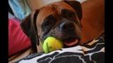 Photos: Family wants pet dog Edgar returned - (1/25)