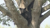 Photos: Mother bear, cubs wow Heathrow residents - (2/6)