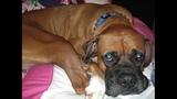 Photos: Family wants pet dog Edgar returned - (15/25)